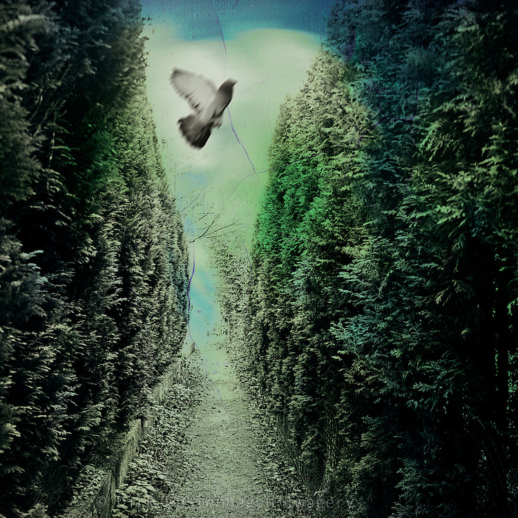 Ascending dove in a narrow pathway