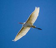 A crane flies over Mojave Narrows Regional Park