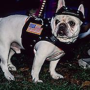 NY468 Dogs parade
