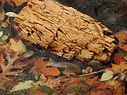 Log with Character on Frozen Lake Shore