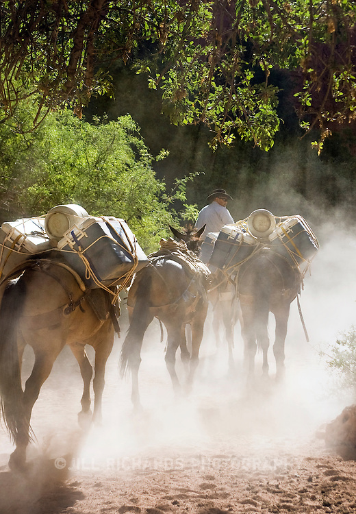 Arizona Outback Adventures, based in Scottsdale, AZ, leads a 4-day hiking trip of Havasupai Falls within the Grand Canyon National Park in Arizona. Pack mules carry out supplies needed by visitors camping.
