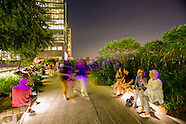 High Line Members - UpLate