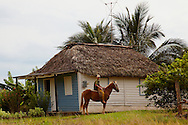 Man on horse beside a thatched house in Pinar del Rio, Cuba.