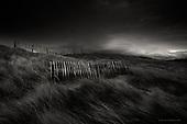Portfolio - Landscape