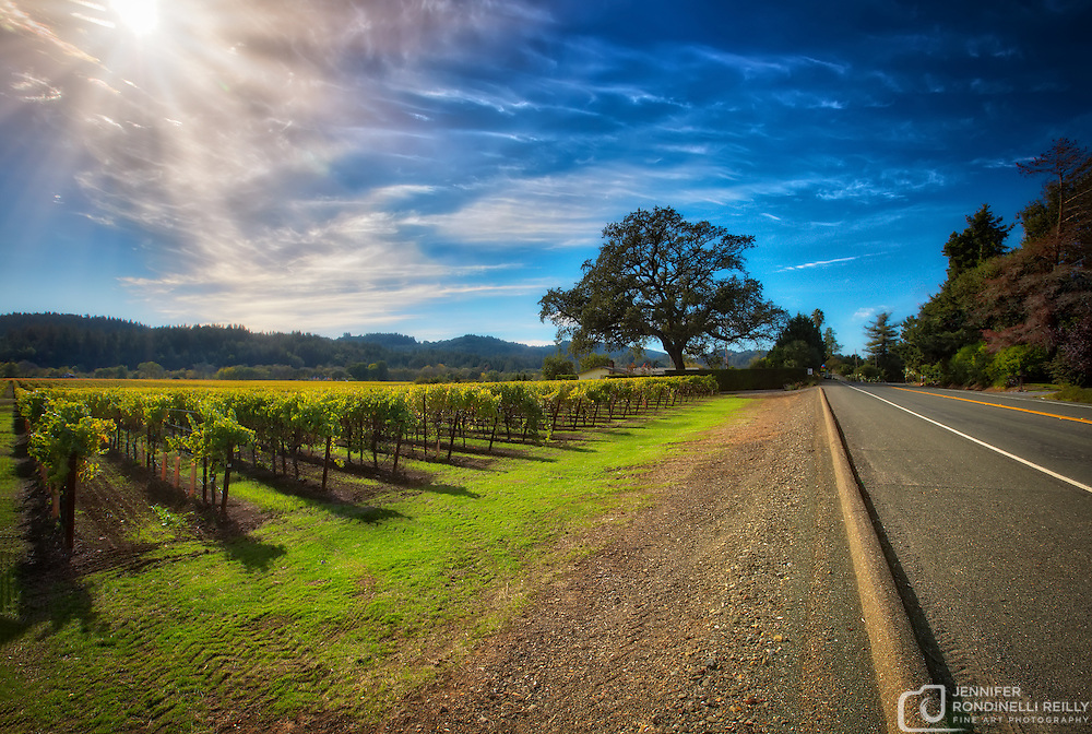Vineyards of Sonoma.