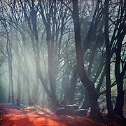 Morning light and fog in a german forest with a resting area - texturized photograph
