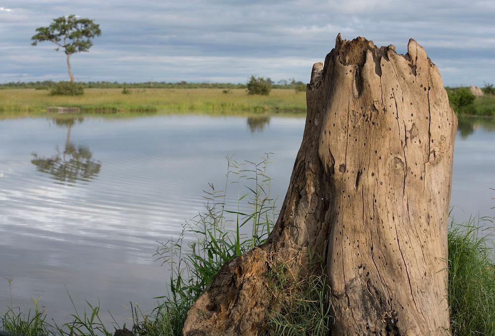 Africa, Botswana, Chobe National Park, Bleached tree trunk along Savuti Marsh during rainy season