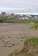 City of St. Paul, St. Paul Island, Pribilof Islands, Alaska. Digital original ©Robin Brandt  #07_1421
