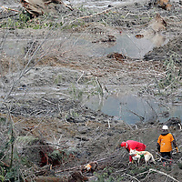A rescue worker with a search and rescue dog look for victims in the mudslide near Oso, Washington as efforts continued to find victims March 26, 2014. The death toll from a weekend landslide in Washington State looked set to rise on Wednesday but officials say some of the scores of people listed as missing may have been double-counted or slow to alert family of their whereabouts. REUTERS/Rick Wilking(UNITED STATES)