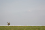 A flock of birds fly over a lone tree and the sparse landscape at Bath Racecourse adjacent to the Cotswold Way