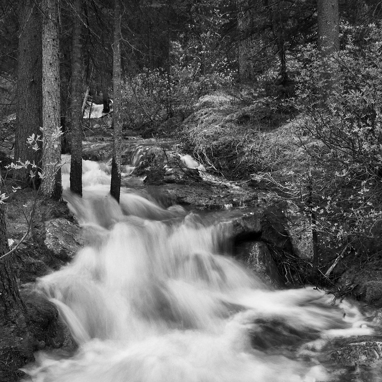 4422 BF - Paradise Creek Near Lake Morraine, Banff, Alberta