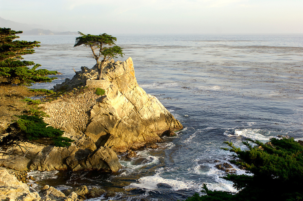 The Lone Cypress, Pebble Beach, 17 Mile drive, Monterey Peninsula, Monterey, California, United States of America