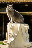 Dusty the Cat 20140415