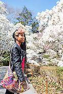 BBG   Magnolias, Daffodil Hill