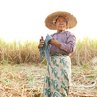 A female farm worker in Myanmar takes a break after harvesting sugar cane by hand.