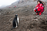 Female Chinese tourist observing gentoo penguin, Pygoscelis papua, Antarctica
