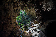 Jungle crowds the entrance to a limestone cavern on Iriomote in the Yaeyama Islands of Okinawa Prefecture, Japan.
