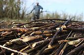 Belize: BSCFA Fairtrade Sugar