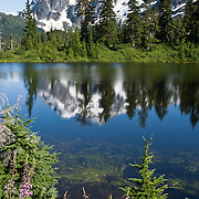 Mount Shuksan reflects in Highwood Lake. Fireweed (Epilobium angustifolium) blooms pink on the edge of the water. Mount Shuksan (9127 feet elevation) is in North Cascades National Park, Washington. Highwood Lake is in Mount Baker - Snoqualmie National Forest.
