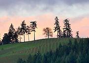 WillaKenzie Estate winery, Willamette Valley, Oregon