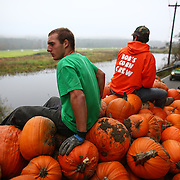 Marcus McAulliffe, and Nick LaFleur ride on a pile of pumpkins in a truck after gathering them from a field at Bob's Corn in Snohomish County. The popular destination farm, known for its corn maze, and pumpkin patches, also has a small country store.  (Joshua Trujillo, seattlepi.com)
