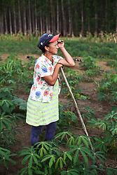 Maria de F&aacute;tima Souza, 50 anos, agricultora sem terra. Maria planta mandioca em uma &aacute;rea ocupada ao lado de uma planta&ccedil;&atilde;o de eucalipto. Faz 10 anos que vive de um acampamento para o outro, em barraco de lona na beira da estrada. <br /> Eun&aacute;polis, BA - Brasil.