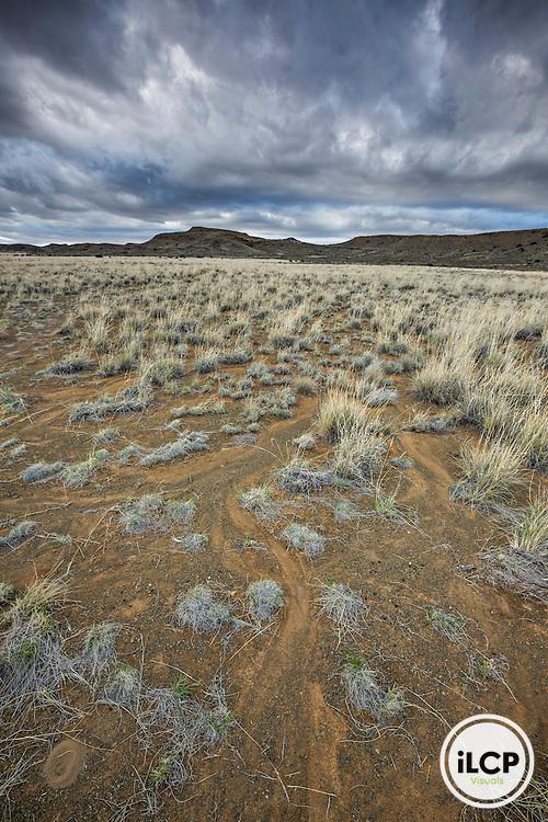 Typical landscape of Karoo with it's low and dry vegetation. Western Cape, Karoo, South Africa / Paysage typique du Karoo avec sa végétation basse et sèche. Western Cape, Karoo, South Africa