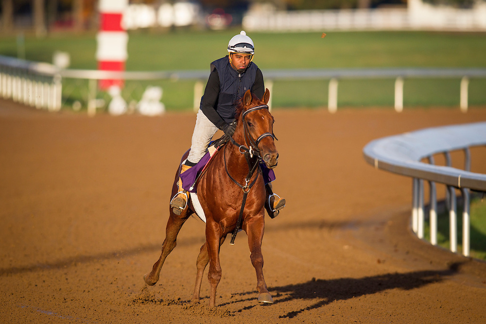 October 29, 2015:   Rated R Superstar, trained by Kenneth G. McPeek and owned by Radar Racing LLC, exercises in preparation for the Sentient Jet Breeders' Cup Juvenile at Keeneland Race Track in Lexington, Kentucky. Alex Evers/ESW/CSM