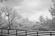 Trees behind a fence in rural Kentucky.  Infrared (IR) photograph by fine art photographer Michael Kloth.