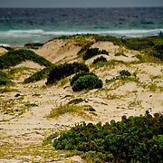 Vegetation and sand, Baby Beach, Aruba