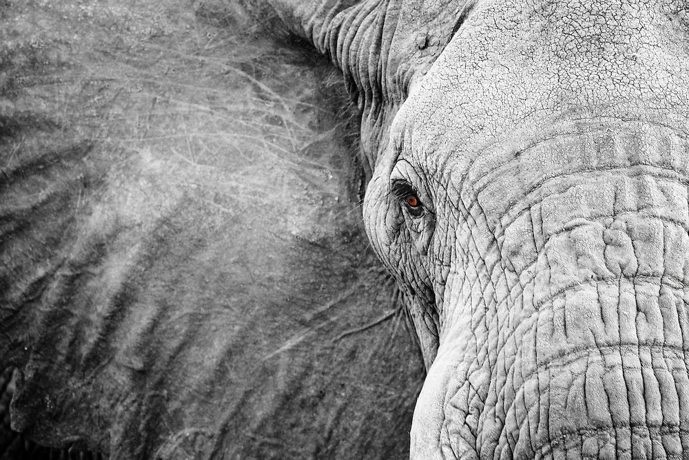 Elephant eye, Meru National Park, Kenya