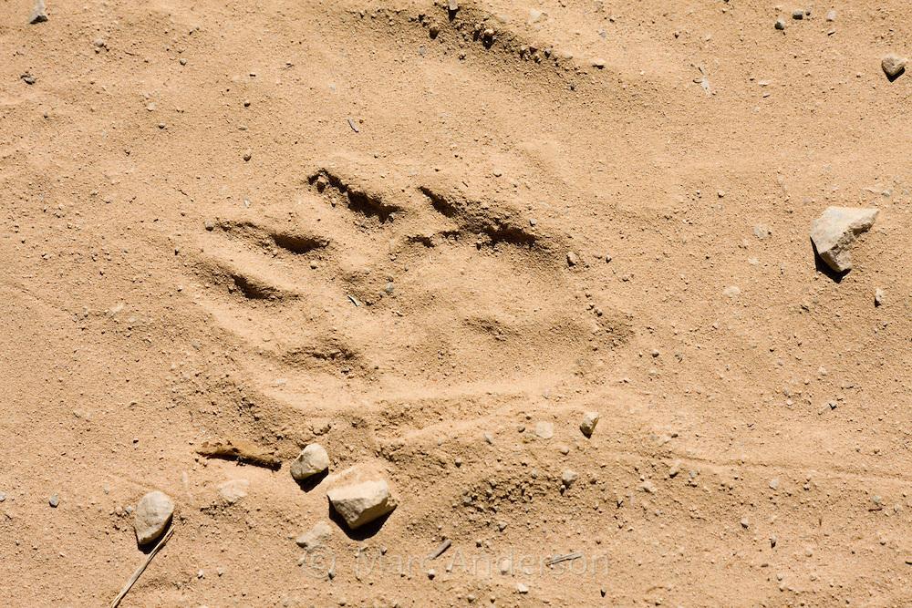 Animal tracks, Kaeng Krachan National Park, Thailand