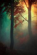 Sunrise on a misty fall morning - texturized photograph