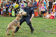 Middletown, New York -  A police officer and police dog demonstrate how the dog would help capture a subject during a Night Out Against Crime event at Thrall Park on Aug. 5, 2014.