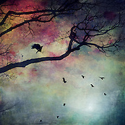 Silhouette of a tree and birds against a colourful background
