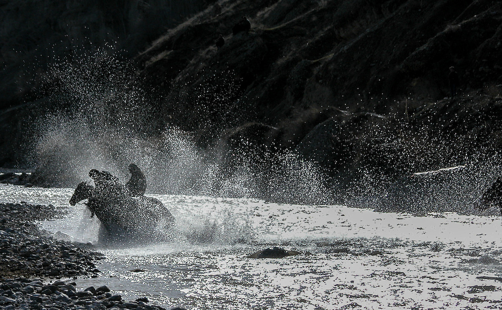 Image of a Tajik horseman charging off with the buz (a stuffed goat) through the river toward the finish at a buzkashi event in the village of Kostarosh, northwest Tajikistan