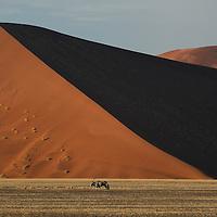 Gemsbok (Oryx gazella), Sand dunes, Sossusvlei, Namib Naukluft Park, Hardap Region, Namibia