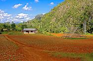 Farm near Pons, Pinar del Rio, Cuba.