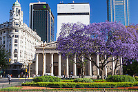 CATEDRAL Y PLAZA 25 DE MAYO, ARBOL DE JACARANDA FLORECIDO, CIUDAD DE BUENOS AIRES, ARGENTINA (PHOTO © MARCO GUOLI - ALL RIGHTS RESERVED)