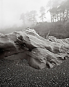 BW01898-00...WASHINGTON - Foggy day on 4th Beachin Olympic National Park. This is an Ilford Delta 100 4x5 film image.