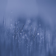 &quot;Blue Streak&quot;<br />