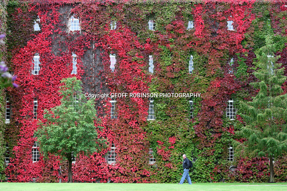 PIC SHOWS THE VIRGINIA CREEPER AT ST JOHNS COLLEGE CAMBRIDGE ON WEDNESDAY SEPTEMBER 21 2011.. A Cambridge University college covered in Virginia Creeper looks spectacular as it turns into a blaze of red as the last day of summer approaches tomorrow (Fri)..The ivy completely covers the back of the building at St John's College and has become one of the most famous autumn sights in Cambridge as the leaves change from green to scarlet...Three quarters of the creeper, which covers New Court, has already been transformed into splendid shades of crimson and scarlet, a day before the autumn equinox...The glorious spectacle has been attracting tourists from all over the world, who have been stopping to have their photos taken in front of the red and green foliage...In some places the vine, which climbs 10 metres high to the top of the four-storey building, is so thick it completely covers the windows...But sadly the sight is short-lived as the leaves will fall off within the next week...SEE COPY CATCHLINE Spectacular red creeper as last day of summer looms