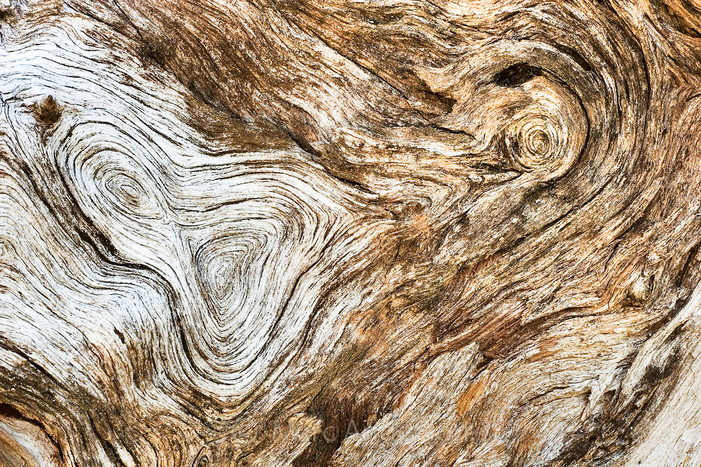 Detail of natural bark patterns in driftwood washed ashore on a tropical island in Fiji..