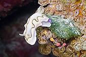 Nudibranch and Sea Slug