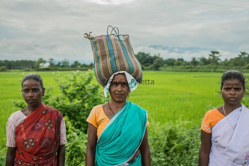 Rice fields, near the border with Bhutan, outside Udalguri, Assam state, India