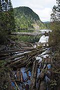 Logs jam at the outlet of Wallace Lake, Wallace Falls State Park, Gold Bar, Washington, USA