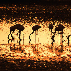 Fauna de Angola