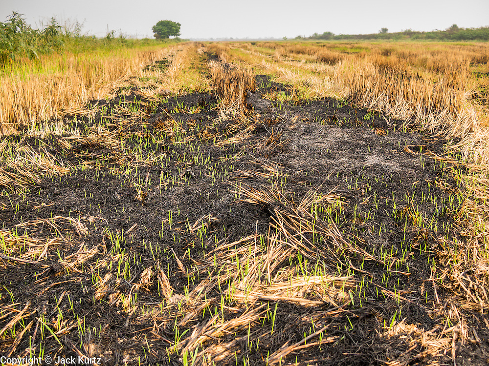 17 MARCH 2014 - BUNG KHAM PROI, PATHUM THANI, THAILAND: Burned out rice fields in Pathum Thani province. It hasn't rained in central Thailand in more than three months, impacting agriculture and domestic water use. Many farms are running short of irrigration water and salt water from the Gulf of Siam has come up the Chao Phraya River and infiltrated the water plants in Pathum Thani province that serve Bangkok. PHOTO BY JACK KURTZ