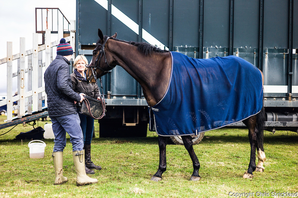 Corbridge, Northumberland, England, UK. 28th February 2016. OvertoSam enjoying the attention glory brings at the Tynedale Hunt annual Point to Point horse racing fixture.