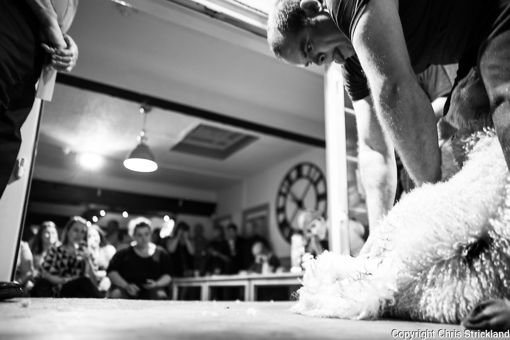 Horse & Hound Inn, Bonchester Bridge, Hawick, Scottish Borders, UK. 6th August 2016. Leading sheep shearers compete in the annual pub speed shearing competition in the village of Bonchester Bridge in the Scottish Borders. Each sheep will take between 25 to 30 seconds to clip and the winner will earn in the region of £500. Contestants come from across the UK and all shear professionally. Judges are on hand and will give red or green cards to indicate a pass or fail on skill level, which is determined largely on how much fleece is removed and if the sheep is nicked. Shearers have their own dress code, and some will even shear in bare feet. Farming is integral to the economy of the Scottish Borders and locals across the generations fill the pub which turns into a live sports theatre for the evening.